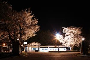 蚕桑駅の桜