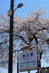 西大塚駅の桜