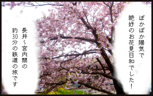 桜回廊ツアー3